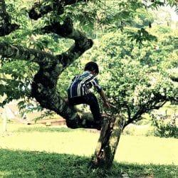 risky play tree outdoors
