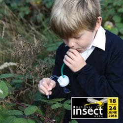 insect week activities