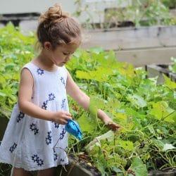 sensory garden in primary school