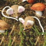 Create an outdoor woodland scene using walnuts to make mice, owls and mushrooms