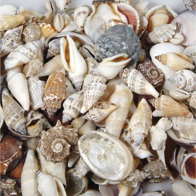 Mixed Shell Pack